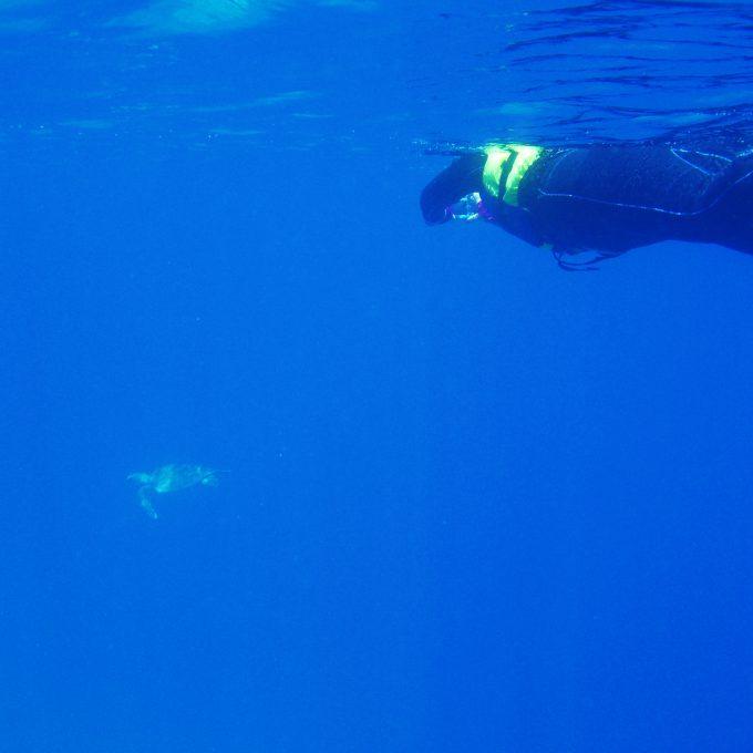 船浮ウミガメ