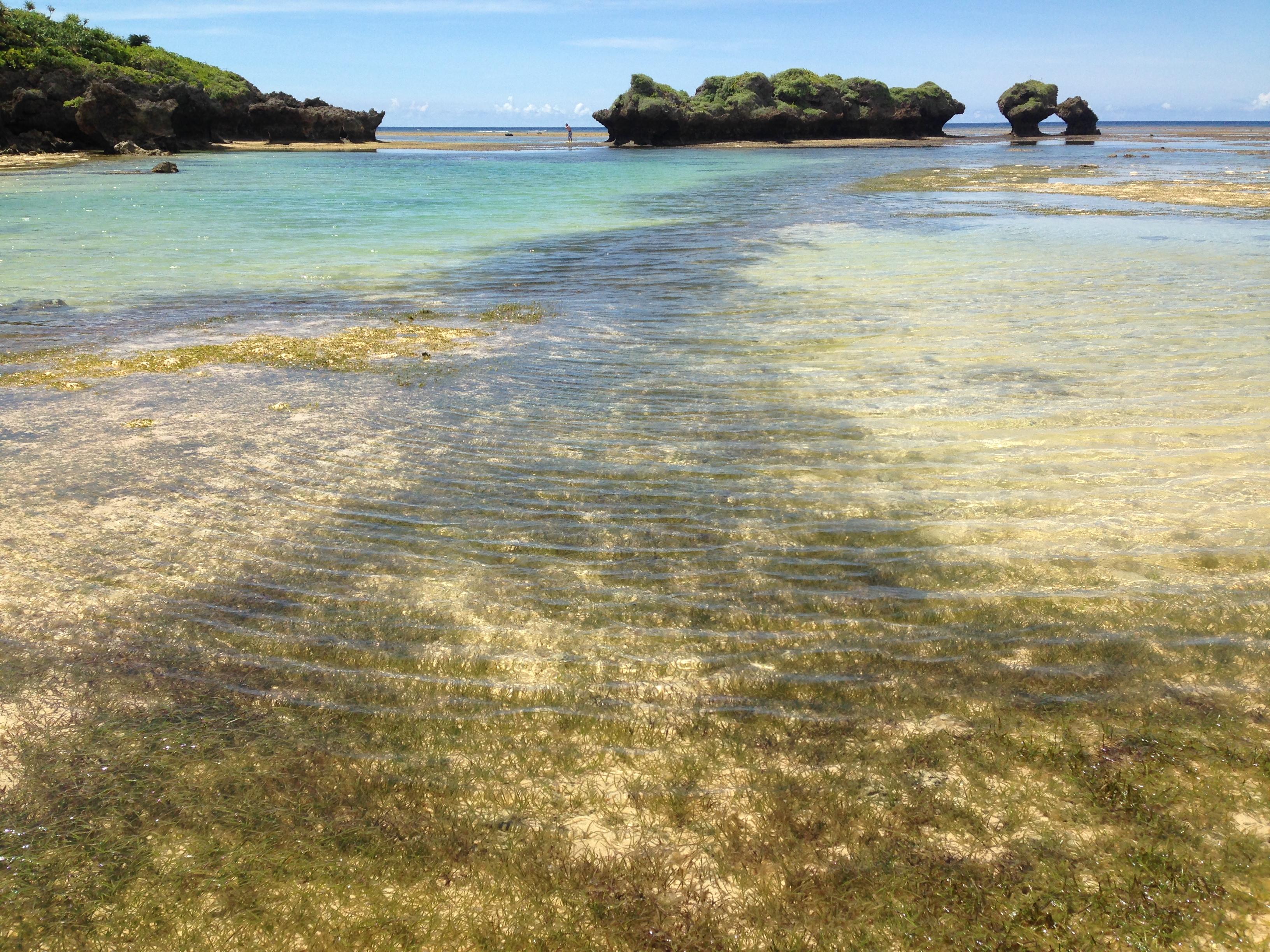 星砂の海藻