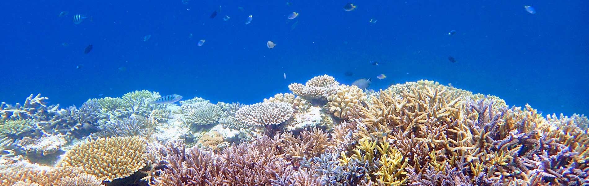 珊瑚のキレイなバラス島でシュノーケル!